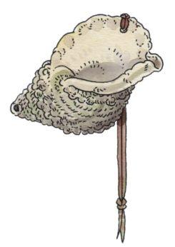 Corn marí